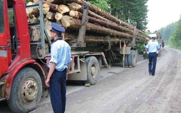 Material lemnos confiscat de polițiști la Câmpulung Moldovenesc, Frasin și Iaslovăț